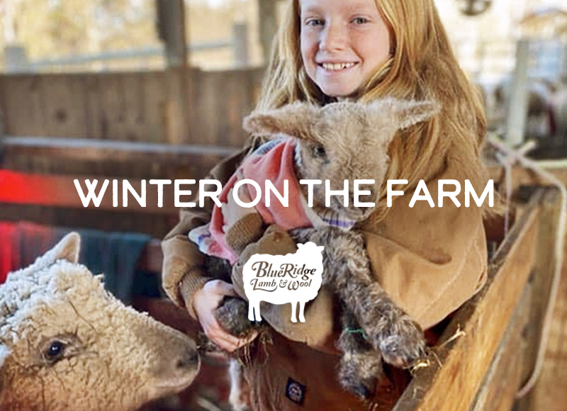 Winter on the farm: Blue Ridge Lamb and Wool